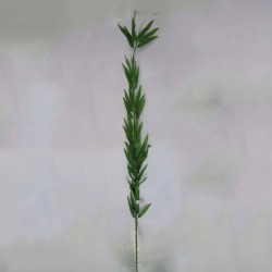 BAMBU FINO 1,50M - Ref. 0167-1